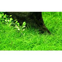 Nano Set mit 6 einfachen kleinen Tropica Topf Pflanzen Aquariumpflanzenset Nr.5