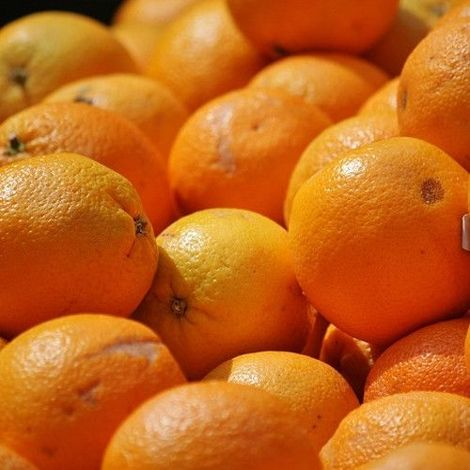 Naranjo - Maceta de 25cm -