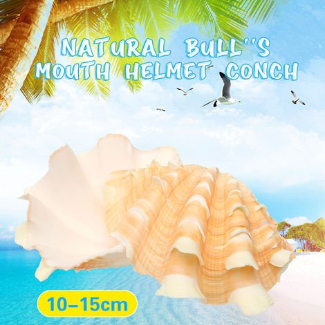 Natural Shell Bull Mouth Helmet Conch Sea Snail Fish Tank Decoration 10-15Cm