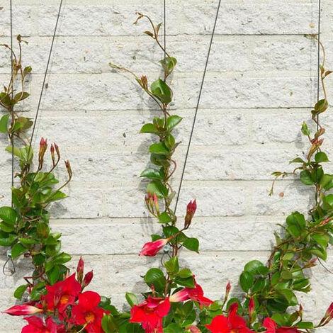 Nature 1/2x Treillis Métallique pour Plantes Grimpantes Mur Extérieur Pergola