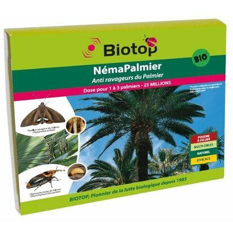 Nematodes contre le papillon du palmier Paysandisia Archon, NemaPalmier