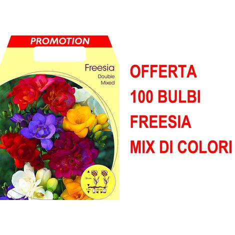 OFFERTA 100 FREESIA DOUBLE MIX BULBS BULBES