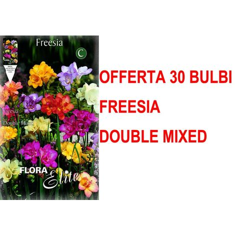 OFFERTA 30 BULBI AUTUNNALI FREESIA DOUBLE MIX BULBS BULBES