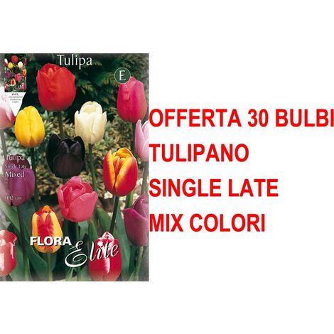 OFFERTA 150 NARCISI DAFFOLDILS BULBI AUTUNNALI AIUOLE GIARDINO BULBS