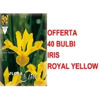 OFFERTA 50 NARCISI YELLOW DAFFOLDILS BULBI AUTUNNALI AIUOLE GIARDINO BULBS