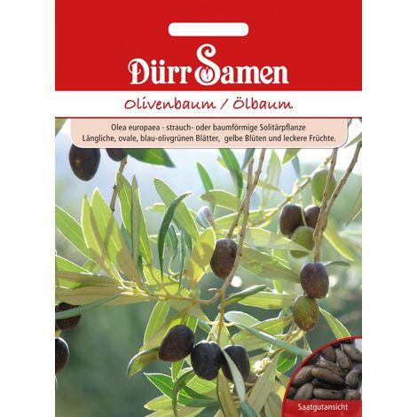 Olivenbaum Ölbaum Olea europaea