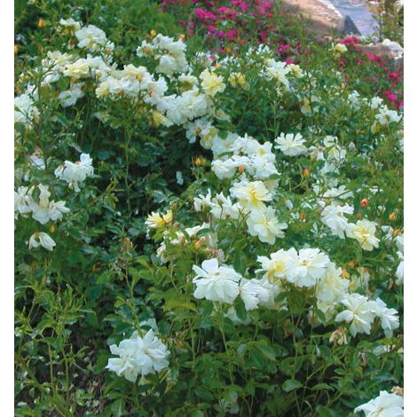 OPALIA® Noaschnee - STOP AFFAIRE : Lot de 3 Opalia - Blanc - les décorosiers