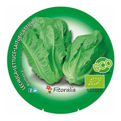 Pack Lechuga Romana 12 Ud. Lactuca sativa