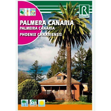 PALMERA CANARIA - SOBRE DE SEMILLAS 10 G