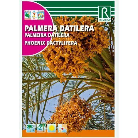 PALMERA DATILERA - SOBRE DE SEMILLAS 6G