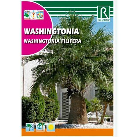 PALMERA WASHINGTONIA - SOBRE DE SEMILLAS 1G