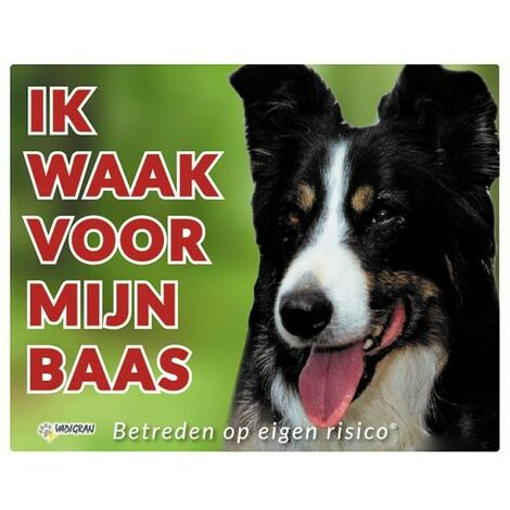 Panneau photo chien Border Collie NL