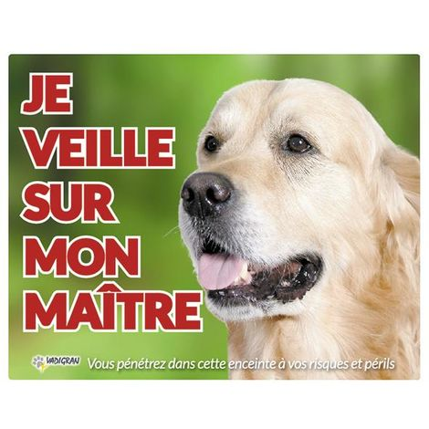 Panneau photo chien Golden Retriever FR