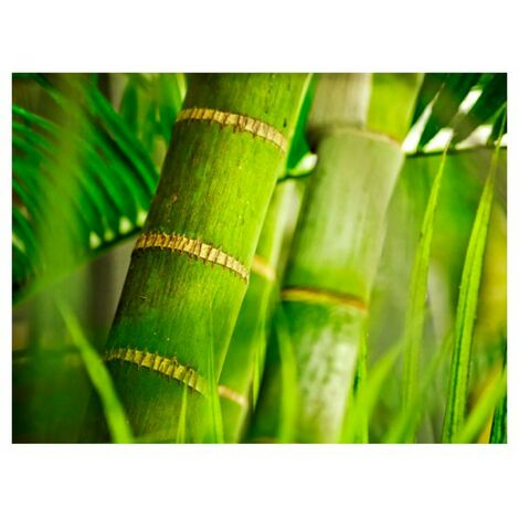Papier peint - bambou - détail .Taille : 350x270