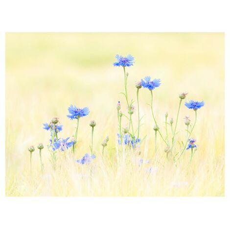 Papier peint - Bleuets .Taille : 200x154