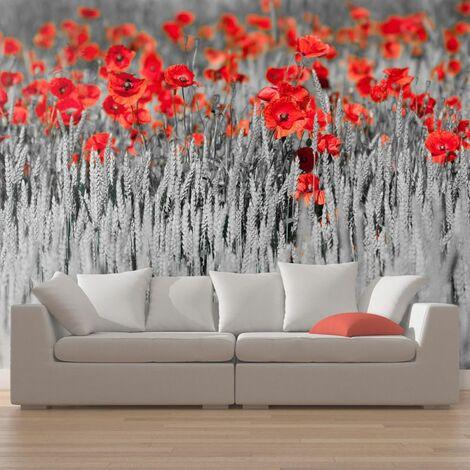 Papier peint - Coquelicots rouge sur champ noir et blanc .Taille : 450x270