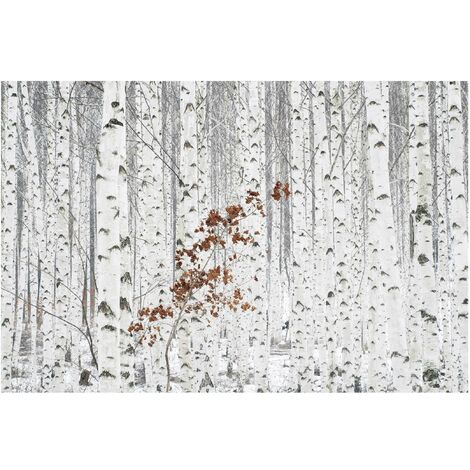 Papier peint intissé - Bouleaux en Automne - Mural Format Paysage