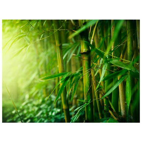 Papier peint - jungle - bambou .Taille : 350x270