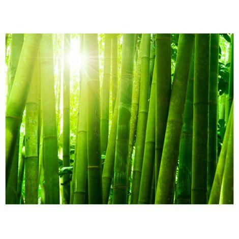 Papier peint - Soleil et bambou .Taille : 300x231