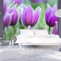 Papier peint - Tulipes violettes au printemps 200x154