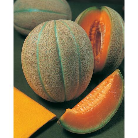 PETIT GRIS DE RENNES - 3 g - Melons