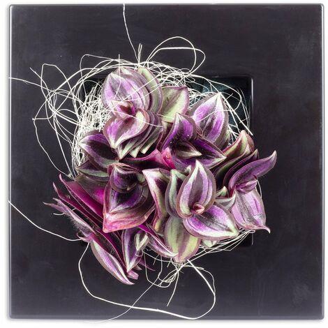 Pflanzenbild Flowerwall XS - schwarz - Tradescantia Zebrina - 17x17 cm