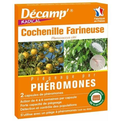 Phéromone contre les cochenilles farineuses