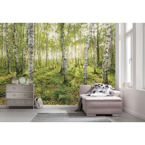 Photo murale intissée de Komar - Birch Trees - Taille: 400 x 250 cm