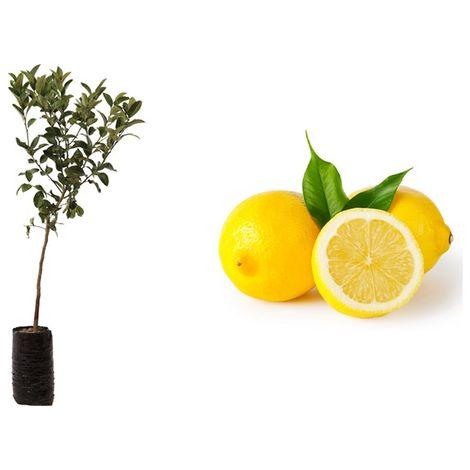 Halbperlen Acryl 6mm 50 Stück Orange zum Basteln Scrapbooking lose Perlen *