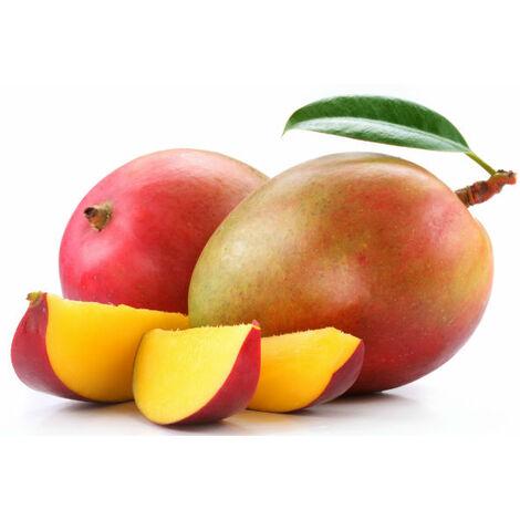Pianta di Mango Manzanillo mangifera indica innestata