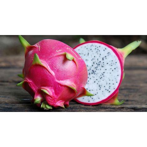 Pianta di Pitaya Frutto del Drago polpa bianca