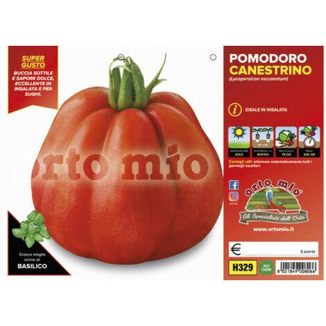 Piantine Pomodoro a cuore varietà antiche canestrino di Lucca 6 piantine orto mi