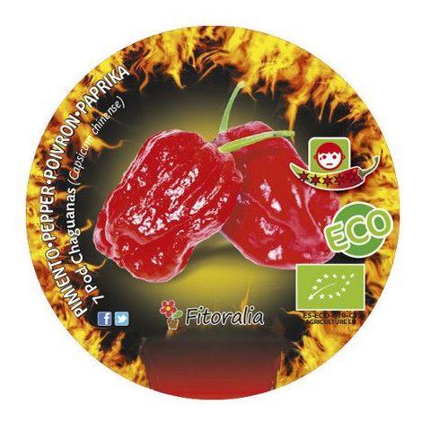 Pimiento picante 7 Pod Chaguanas - Maceta de 10,5cm - ECO
