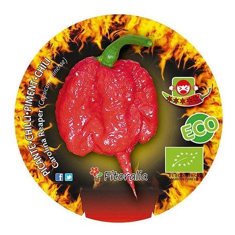 Pimiento picante Carolina reaper - Maceta de 10,5cm - ECO