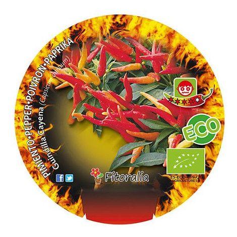 Pimiento picante Cayena - Maceta de 10,5cm - ECO