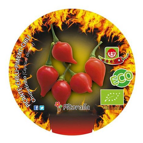Pimiento picante Chupetinho - Maceta de 10,5cm - ECO