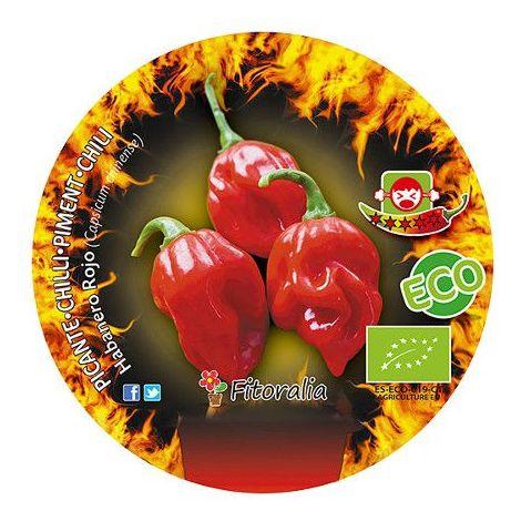 Pimiento picante Habanero rojo - Maceta de 10,5 - ECO
