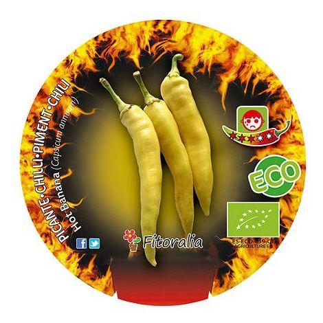 Pimiento picante Hot banana - 1Ud. - Maceta de 10,5cm - ECO