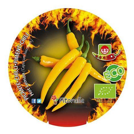 Pimiento picante Hot lemmon - 1Ud. - Maceta de 10,5cm - ECO