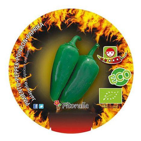 Pimiento picante Jalapeños - Maceta de 10,5cm - ECO
