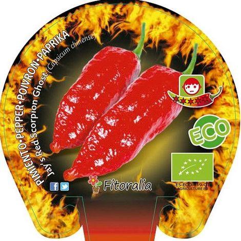 Pimiento picante Jay's Red Scorpion Ghost - Maceta de 10,5cm - ECO