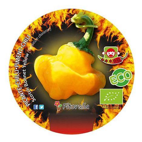 Pimiento picante Scoth bonnet yellow - 1Ud. - Maceta de 1Litro - ECO