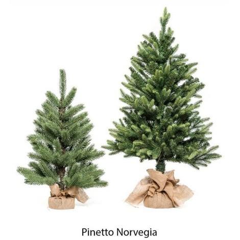 PINETTO NORVEGIA 60 CM XONE SRL