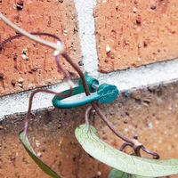 Plant wire and ties