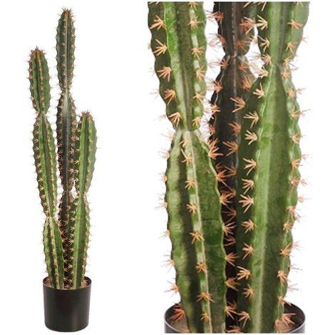 Planta Cactus de San Pedro en maceta. Altura 122 cm