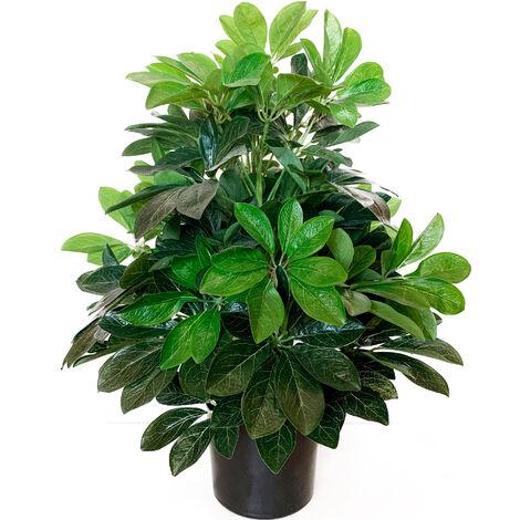 Planta Cheflera artificial de 60 cm de altura con maceta
