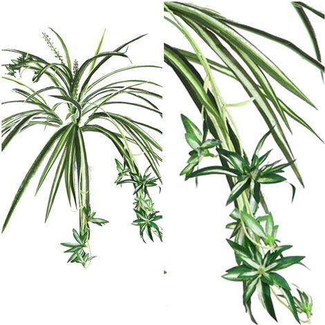 Planta Colgante Cinta Artificial. 58 Cm