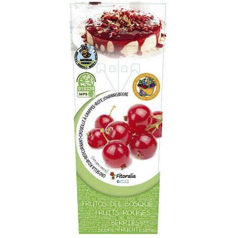 Planta de grosella roja 2L Natural