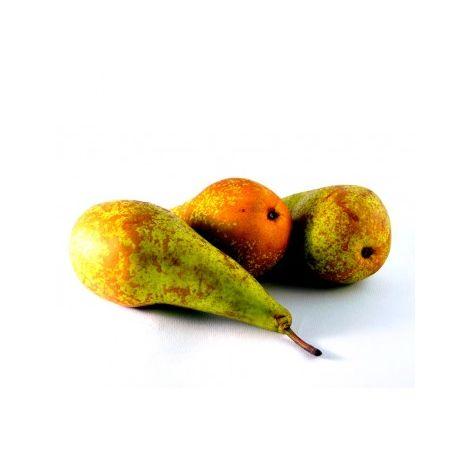 Planta Frutal Peral Conferencia. Pera Mas Cultivada. 120 - 150 Cm