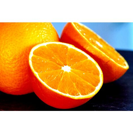 Planta Naranjo Salustiana. una de la Mejor Naranja. 120 Cm